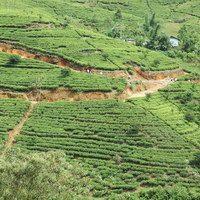 חוות התבלינים בסרי לנקה