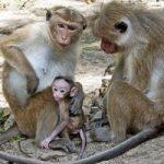 גן החיות של קולמבו