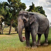 רכיבה על פילים בסרי לנקה