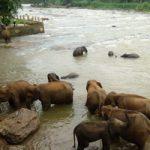 Sri_Lanka_200_006