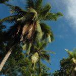 Sri_Lanka_200_034