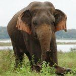 Sri_Lanka_200_036