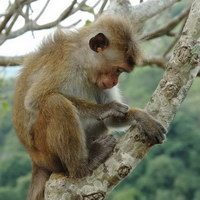 Sri_Lanka_200_043