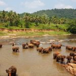 Sri_Lanka_200_044